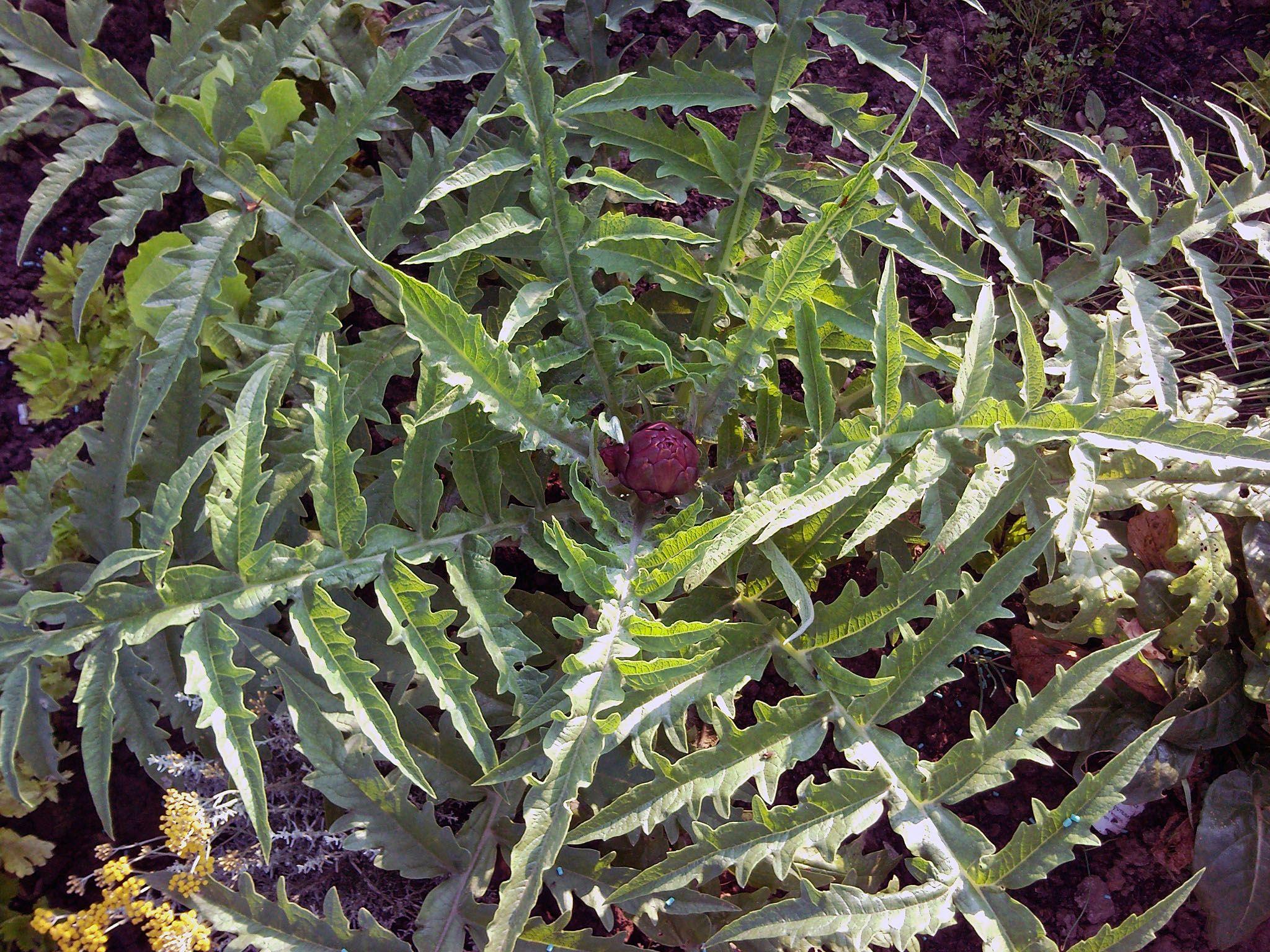Jardin for Deco 6 brumath