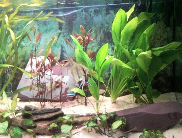 Mon aquarium for Deco 6 brumath